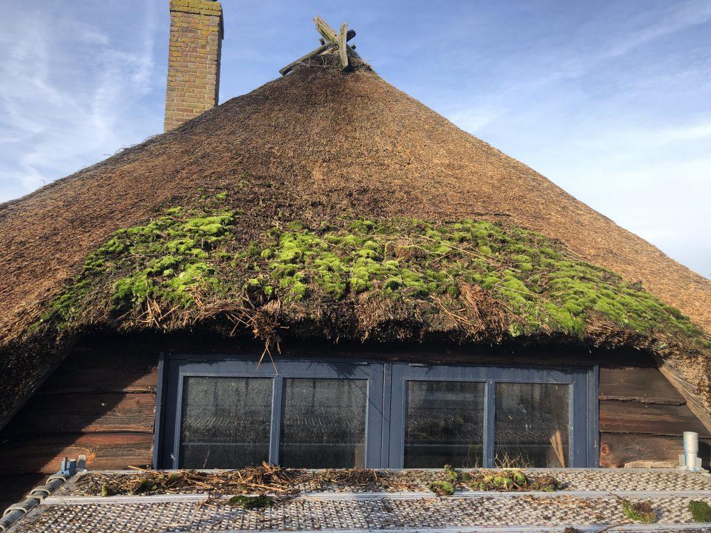 mos op dakkapel van een rieten dak